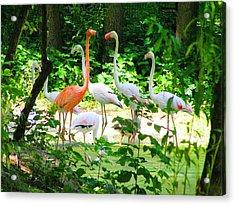 Flamingo Acrylic Print by Oleg Zavarzin