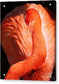 Flamingo Resting Acrylic Print by Dale Nelson