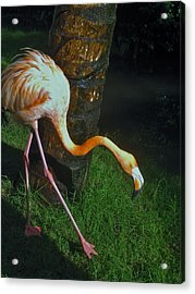 Flamingo Search Party Acrylic Print