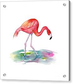 Flamingo Step Acrylic Print