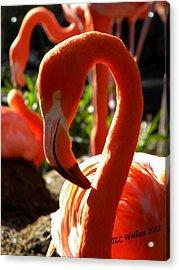 Flamingo Acrylic Print by Tammy Wallace