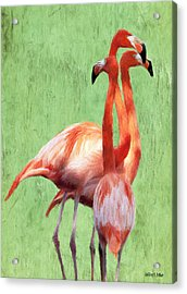 Flamingo Twist Acrylic Print by Jeff Kolker