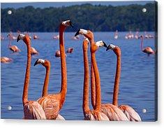 Flamingos 1 Acrylic Print by Skip Hunt