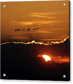 Flamingos At Sunset Acrylic Print
