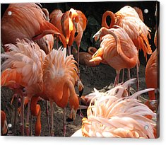 Acrylic Print featuring the photograph Flamingos by Beth Vincent