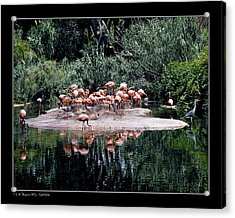 Acrylic Print featuring the photograph Flamingos Colony by Pedro L Gili