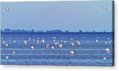 Flamingos In The Pond Acrylic Print