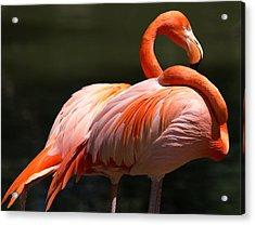 Flamingos Acrylic Print by John Kunze