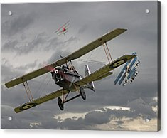 Flander's Skies Acrylic Print by Pat Speirs