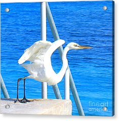 Acrylic Print featuring the photograph Flaps Up by Patti Whitten