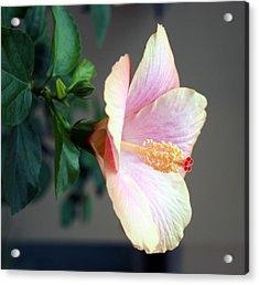 Flare 18 Acrylic Print