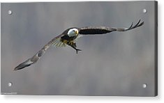 Flat Out  Acrylic Print by Glenn Lawrence