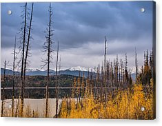 Flathead National Forest Acrylic Print