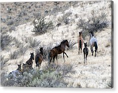 Fleeing Up The Draw Acrylic Print by Mike  Dawson