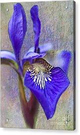 Fleur-de-lys Acrylic Print by Heiko Koehrer-Wagner