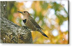 Flicker Acrylic Print by Debbie Sikes