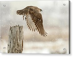 Flight Against The Snowstorm Acrylic Print