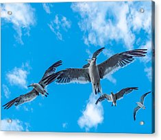 Flight Acrylic Print by CarolLMiller Photography
