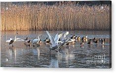 Flight From Ice Acrylic Print