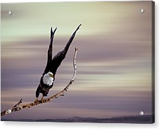 Flight  Acrylic Print by Gary Smith