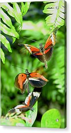 Flight Acrylic Print by  George Griffiths
