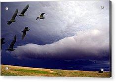 Flight Into The Storm Acrylic Print
