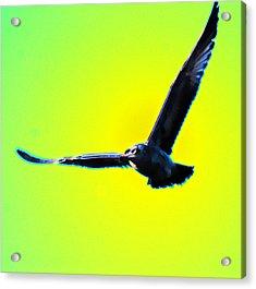 Flight Acrylic Print by Joe Bledsoe