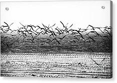Flight Acrylic Print by John Rizzuto