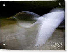 Acrylic Print featuring the photograph Flight Of Fancy by Anne Rodkin