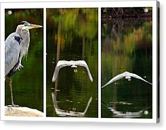 Flight Of The Crane Acrylic Print by Davina Washington