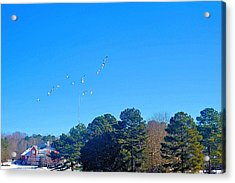 Flight Of The Geese Acrylic Print