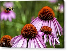 Flight Of The Honey Bee Acrylic Print