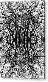 Tree No. 11 Acrylic Print