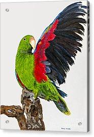 Flirting Parrot By Barbara Heinrichs Acrylic Print by Sheldon Kralstein