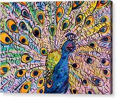 Flirty Peacock Acrylic Print by Eloise Schneider