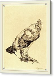 Félix Bracquemond French, 1833-1914, The Old Cock Acrylic Print by Litz Collection
