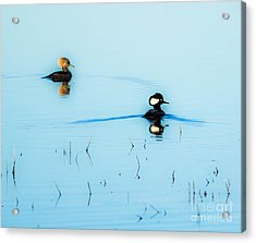 Floating And Glowing Acrylic Print by Ursula Lawrence