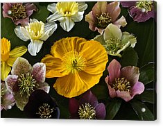 Floating Bouquet Of Early April Flowers Acrylic Print