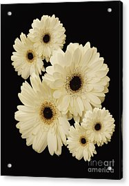 Floating Flowers Acrylic Print by Nancy Dempsey