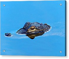 Floating Gator Eye Acrylic Print