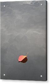 Floating Jewel Acrylic Print by Jake Barbour