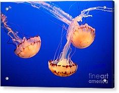 Floating Lanterns Acrylic Print