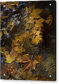 Acrylic Print featuring the photograph Floating Leaves - Fall In Rome by Michael Flood