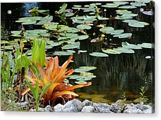 Floating Lily Pond Acrylic Print