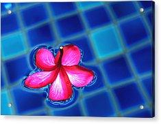 Floating Petal Acrylic Print