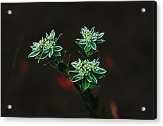 Acrylic Print featuring the photograph Floating Petals by John Johnson