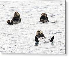 Floating Sea Otters Acrylic Print by Saya Studios