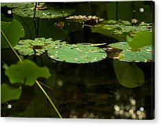 Acrylic Print featuring the photograph Floating World 1 - Lily Pads  by Jane Eleanor Nicholas