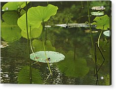 Acrylic Print featuring the photograph Floating World #2 - Lotus Leaves Art Print by Jane Eleanor Nicholas