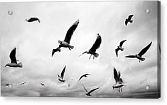 Flock Acrylic Print by Mark Rogan